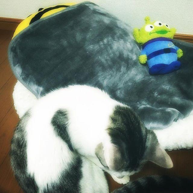れおさんのベッド💛🐱 #愛猫 #れおの #ベッド #ミニオン #と #リトルグリーンメン #も #仲間入り #れおには #わからんかも #だけど #クリスマスプレゼント 🎁