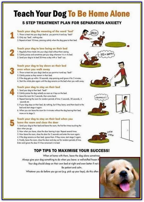 Tips On How To Efficiently Train Your Bad Dog Behavior Dog