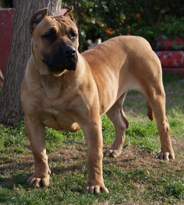 Breed Of Dog In Person Of Interest
