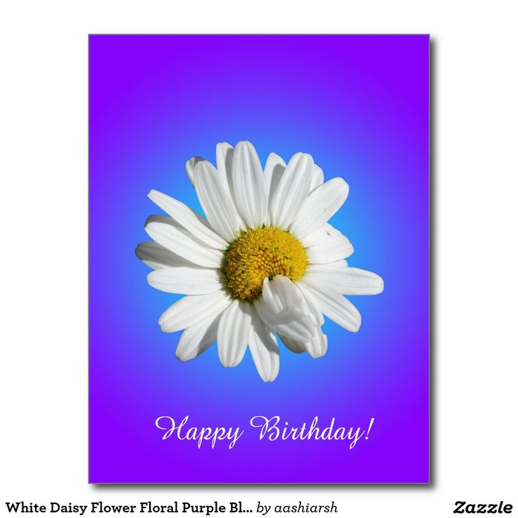 White #Daisy #Flower #Floral Purple Blue Gradient #Postcard #birthday #cards