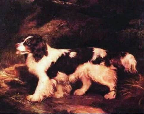 The English Water Spaniel is a breed of dog that has been extinct since the first part of the 20th century, with the last specimen seen in the 1930s. It was best known for its use in hunting waterfowl and for being able to dive as well as a duck. It is described as similar to a Collie or to a cross between a Poodle and a Springer Spaniel with curly fur and typically in a white and liver/tan pattern.