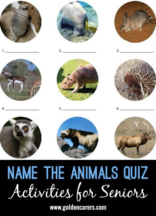 # World Animal Day - October 4 # Have fun naming some more unusual animals. A…