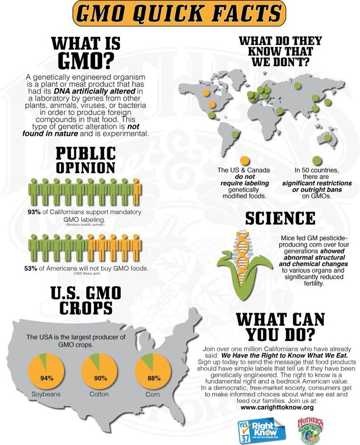 gmos in our food How widespread are gmos in our food supply have you ever wondered just how many gmos are out there if not,.
