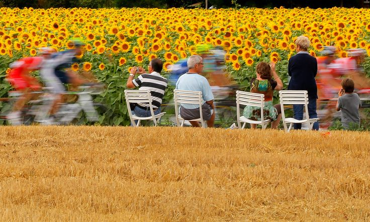 """Fans watch as the peloton passes through sunflower fields during stage eighteen of the 2012 Tour de France from Blagnac to Brive-la-Gaillarde on July 20, 2012 in Blagnac, France"""