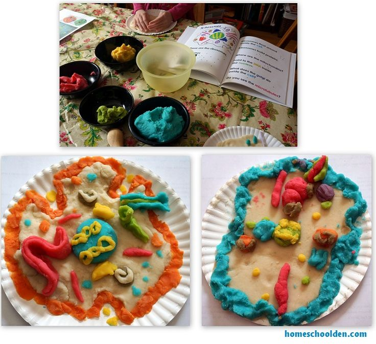 Cell Unit: Cell Organelles and their Function, Animal vs. Plant Cells, Eurkaryotic vs. Prokaryotic Cells, and more | Homeschool Den | Mobile Version