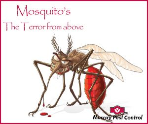 New blog - Mosquitoes - the terror from above, helpful information on how to protect yourself and your family. http://murraypestcontrol.com.au/blog/mosquitoes-the-terror-from-above/