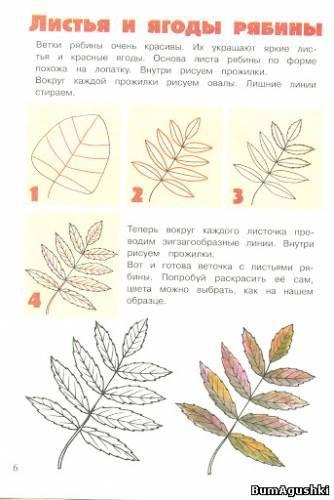 Как нарисовать листья рябины - Рисуем природу - Уроки рисования - БумАгушки - детские раскраски и многое другое