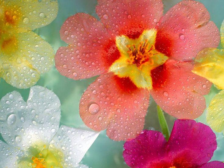 35 Best Flowers Blossom Images on Pinterest a Flower