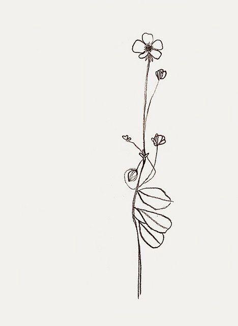 Buttercup • Smörblomma