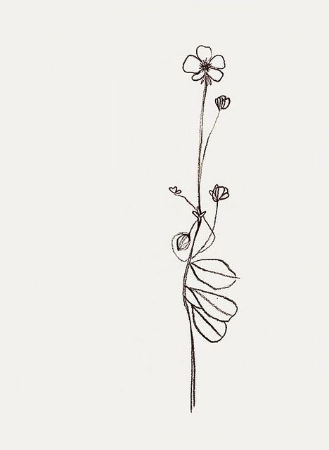 Basic Flower Line Drawing : Best images about tattoo on pinterest wild flower