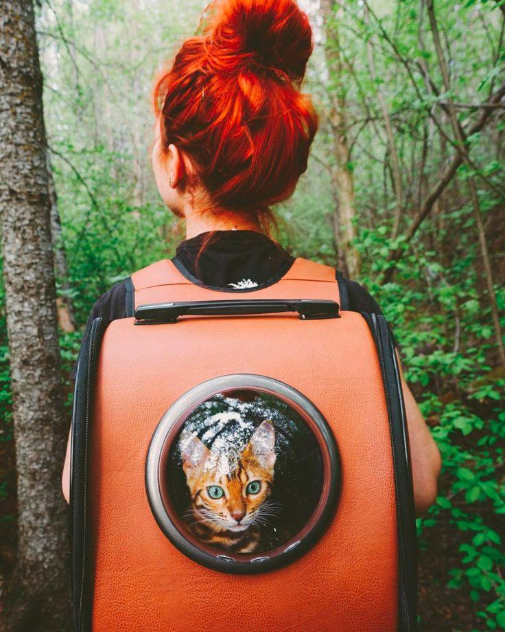 Картинки по запросу traveling with bengal cats