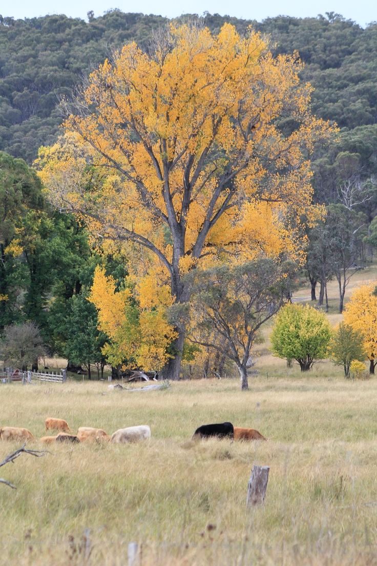 Autumn in Armidale, New England - UNE Partenrships