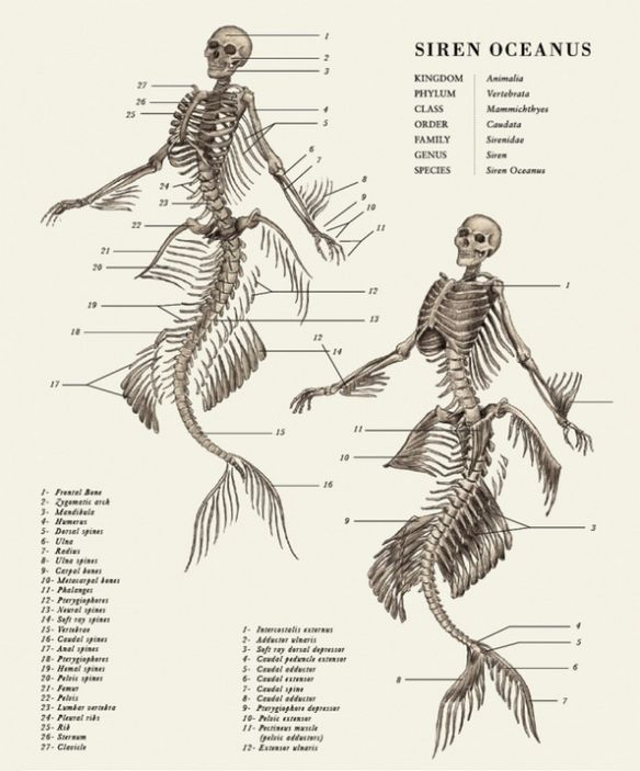 siren structure graphic design inspiration pinterestsiren structure graphic design inspiration pinterest mythological creatures, mythical creatures and mythology