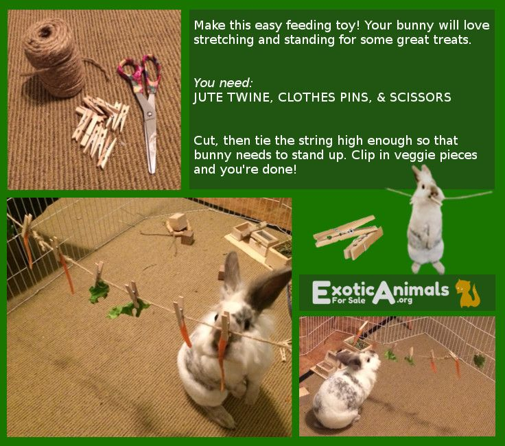Bunny Clothes Line -  DIY Bunny Rabbit Toys that are Cheap and Easy to Make. Awesome for all sorts of small animals. Bunny approved DIY Rabbit toys!