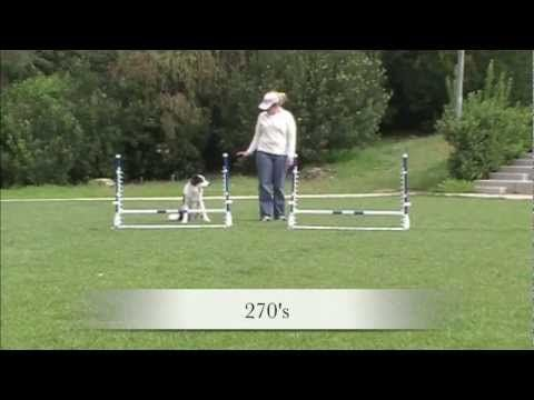 Jump Practice Patterns   Agility Dog Training   YouTube