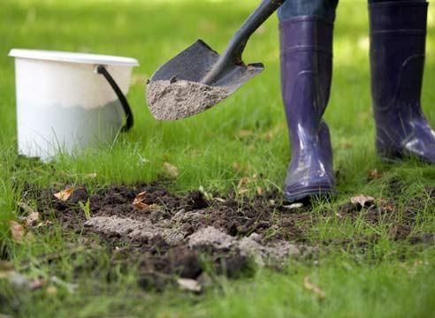 ЗОЛА И ЛЕЧИТ И КАЛЕЧИТ | Дачный сад и огород