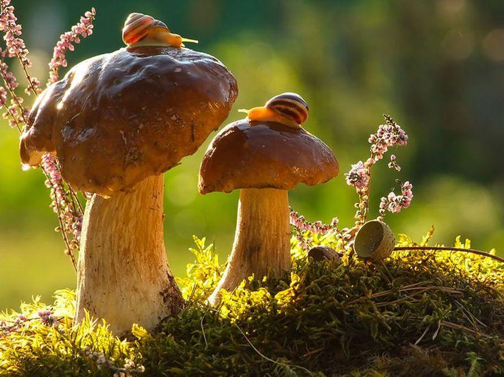 25 photographies en pleine nature qui dévoilent l'harmonie entre les champignons et les animaux de la forêt