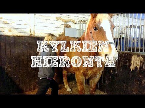 Kuulostaako tutulta tilanne, jossa hevonen kaatuu ympyrällä sisäänpäin, eivätkä voimakkaammat avut korjaa tilannetta kuin korkeintaan hetkeksi? Jos hevonen on haluton taipumaan kaarevilla urilla, voi se kieliä kireistä kylkilihaksista. Katso uusimmasta videosta, mitä ongelmalle voi tehdä!   http://impulsoblogi.blogspot.com/2017/01/shiatsu-hevoshierontaa-videolla-osa-4.html?spref=fb  hevosshiatsu, hevoshieronta, hevoshieroja, Tampere, Jämsä, vino hevonen, jäykkä hevonen