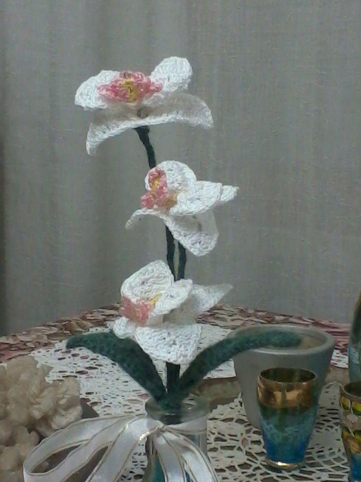 orchidee raffinate