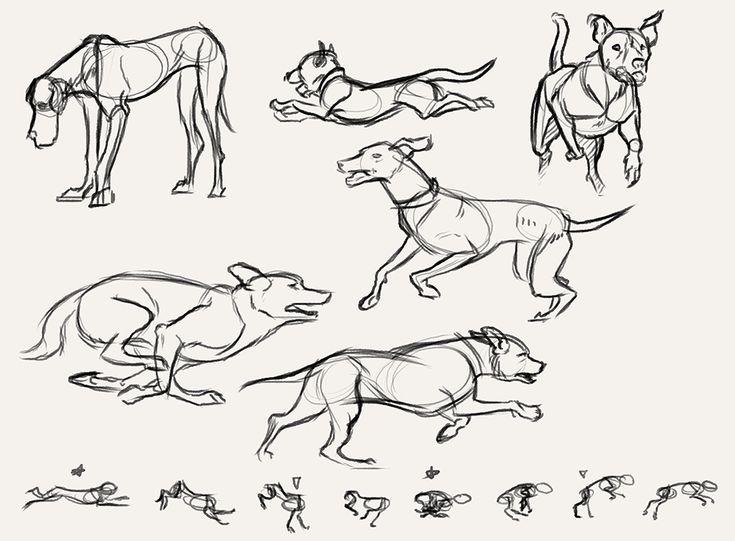 Run cycle of animal