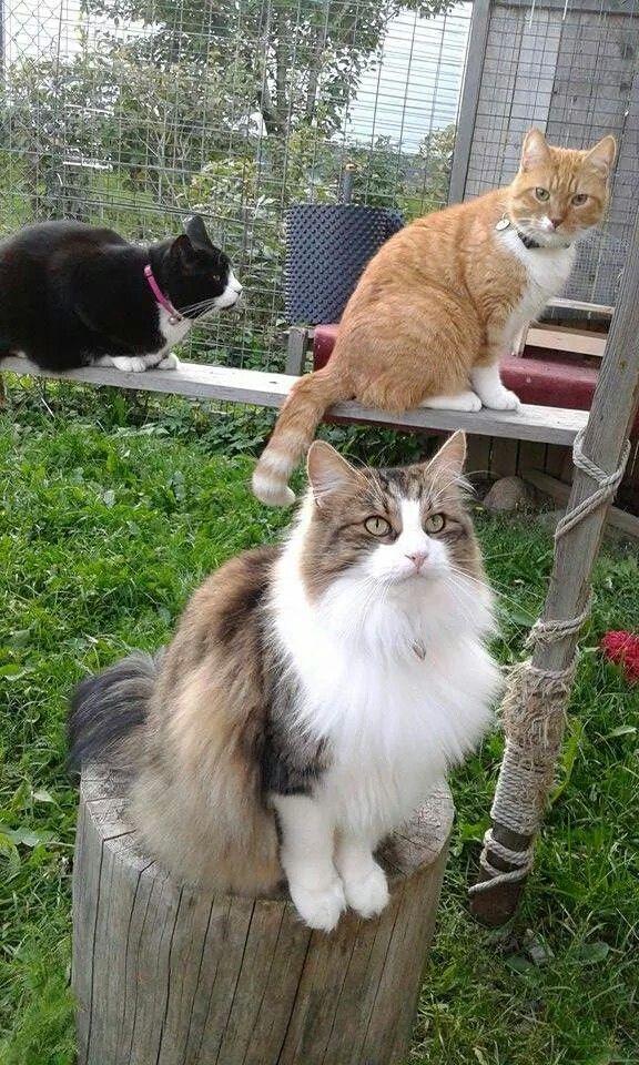 Bella, jupiter ja Neptunus