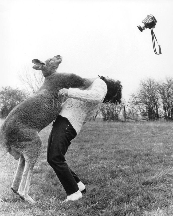 Kangaroo punches a photographer Art Print by John Drysdale at King & McGaw