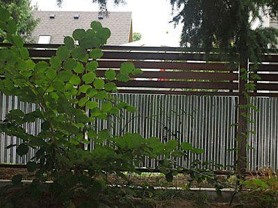 Corrugated AND horizontal wood fence. Best of both worlds. :)