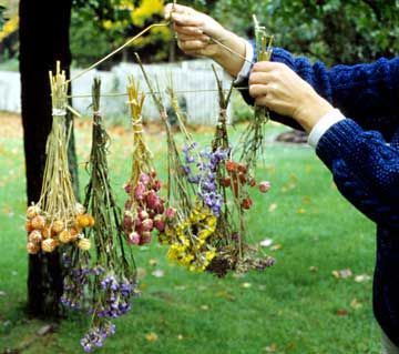 It's sometimes - or always - hard to throw away pretty flowers you received -- Here's a 'How-To' on creating beautiful dried flowers -- via @Gayle Roberts Merry Homes and Gardens