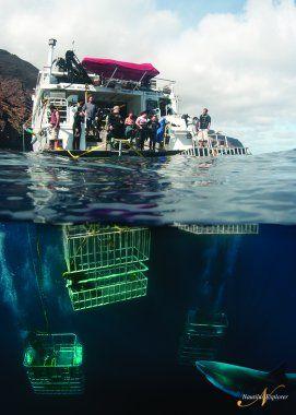 Albatros top Boat propone crociere uniche al mondo ricche di incontri spettacolari in collaborazione con Nautilus Explorer,
