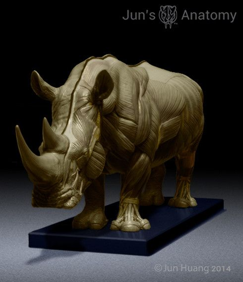 Rhino Anatomy model at 1/16th scale - flesh & superficial muscle – Jun's anatomy