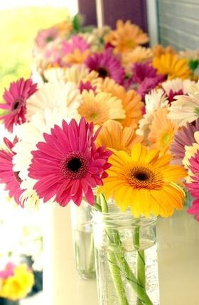 Gerbera daisies - my very favorite flower!! Used these for my wedding bouquet.