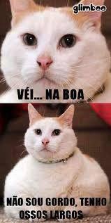 Resultado de imagem para caes e gatos engraçados