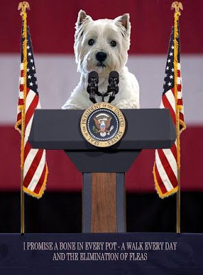 Westie Julep: My Vote Is Decided!