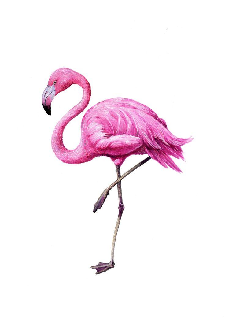 понять, фламинго фото рисунков его опубликованную