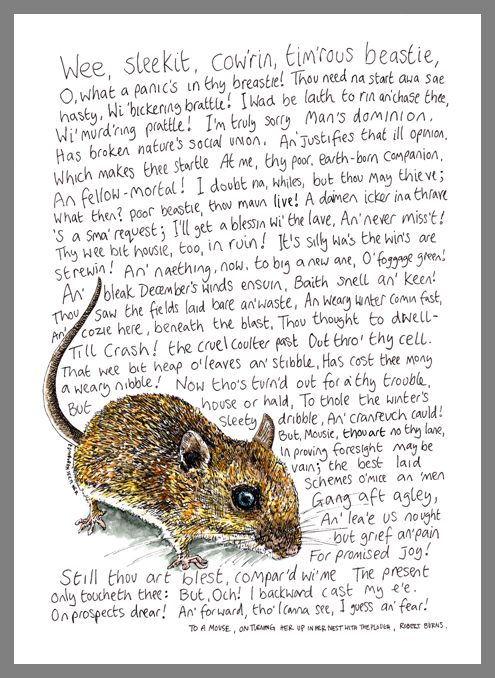 A wee beastie sketch inspired by Robert Burns' poem 'To A Mouse'. http://edinburghsketcher.com/2015/01/25/a-wee-beastie-sketch-for-robert-burns/