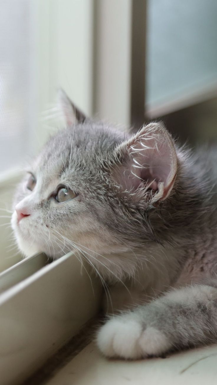 best Cute Baby Cats images on Pinterest