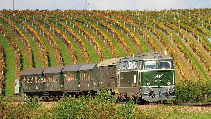 Fahrt mit Wachaubahn und Reblaus Express genießen