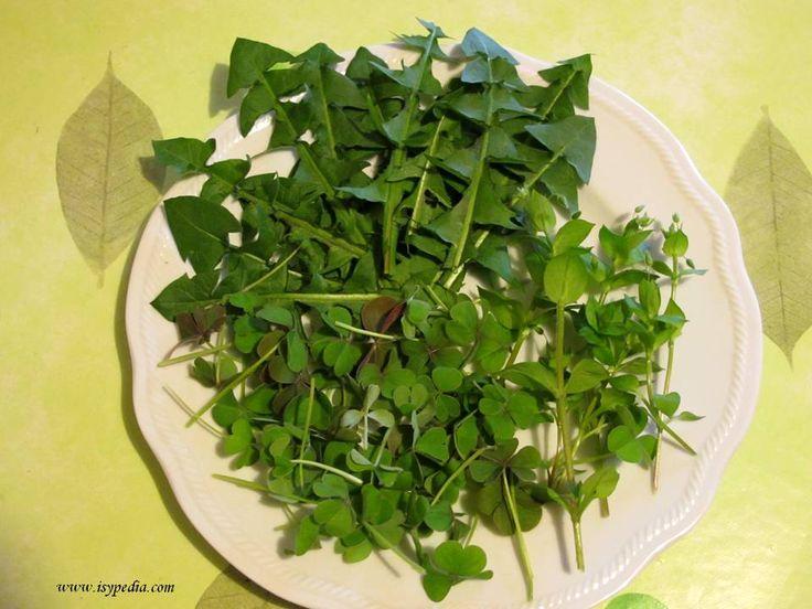 Andar per erbe selvatiche: insalata primaverile depurativa