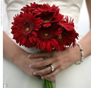My gerbera daisies I want