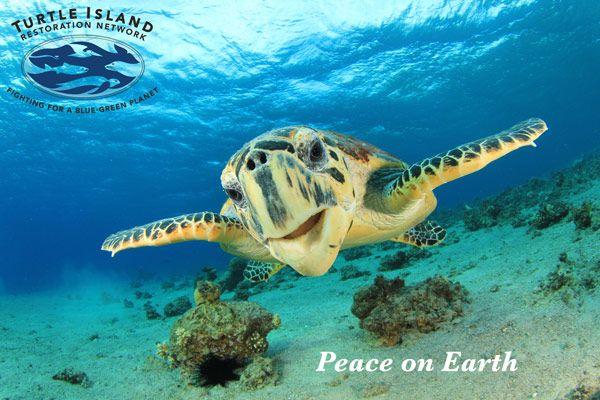 Sea Turtle - Peace on Earth (Seaturtles.org)