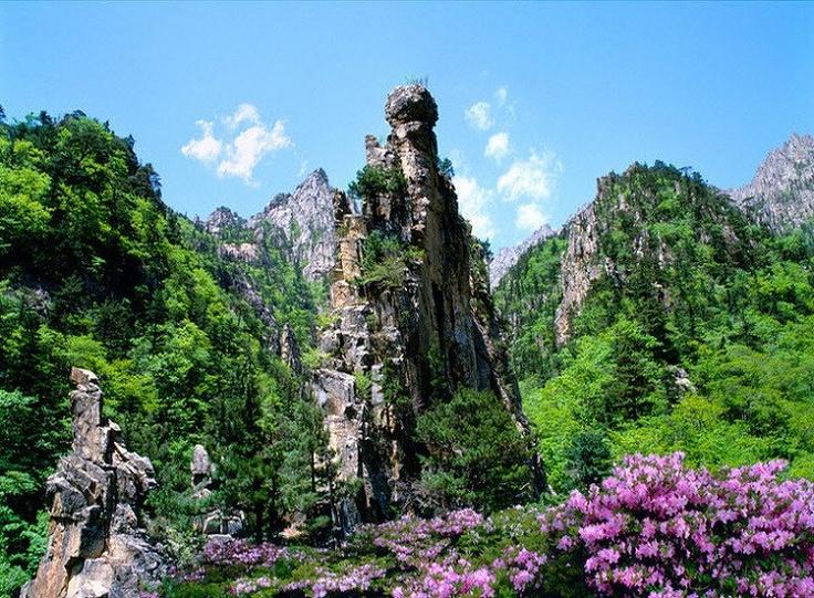 Mountain에 있는 태임 정님의 핀 화실, 한국화, 그리기