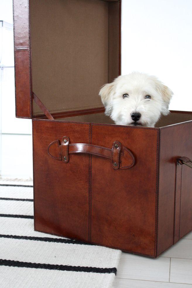 Homevialaura   Balmuir Oxford leather trunk in cognac size M   livingroom   striped carpet   coton de tulear dog