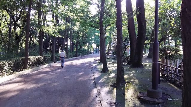 ホラー漫画家・神田森莉 ハムブログ: 昨日の小走り。羽根木公園を6周。