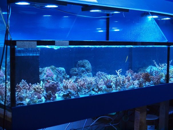 17 Best Images About Coral Frag Tanks Sale Tanks On
