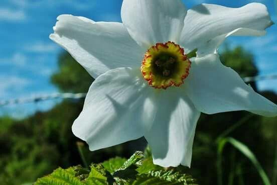 Flor en Polincay Fotografia: Sandra Butkovich