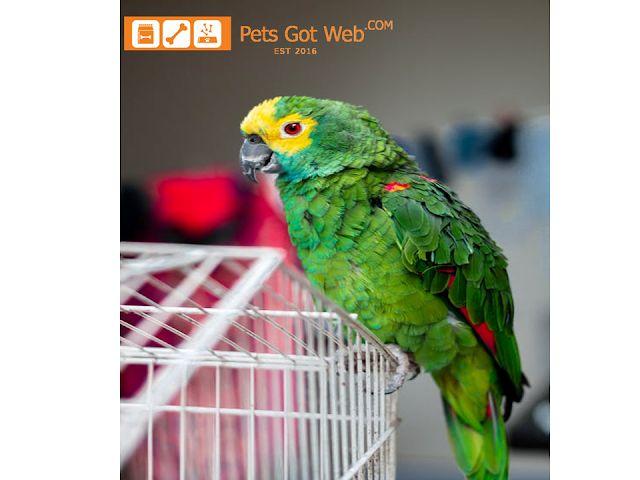 بيتس جوت ويب تقدم لكم فوائد العصافير في المنزل Petsgotweb Bird Supplies Parrot Perch Small Pet Supplies