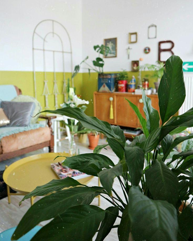 Urban jungle in my livingroom