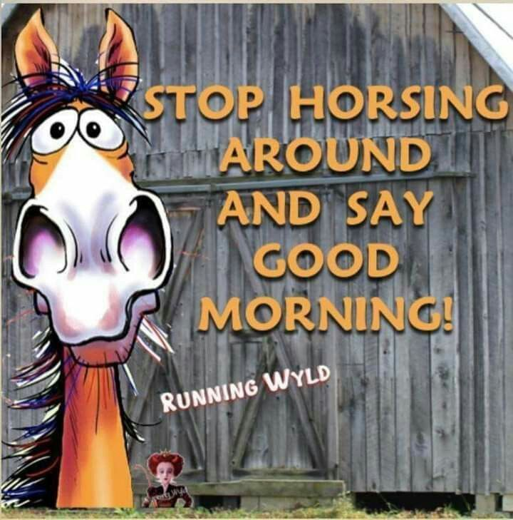 Pin By Anne On Good Morning Funny Horse Memes Good Morning Quotes Funny Horse