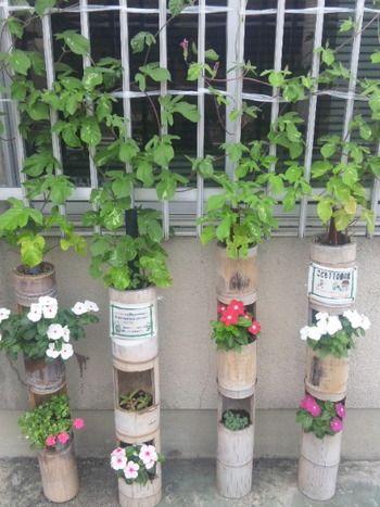 竹の節を利用した竹筒アパート。色とりどりで花たちも楽しそう。楽しいリズムを奏でてくれます。