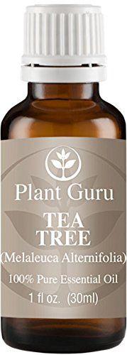 Tea Tree Melaleuca Essential Oil 30 ml 1 oz 100 Pure Undiluted Therapeutic Grade *** BEST VALUE BUY on Amazon